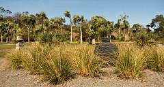 mull of galloway logan botanic garden-4131547-2 (E.........'s Diary) Tags: eddie ross olympus omd em5 mark ii spring 2019 logan botanic garden mull galloway dumfries