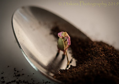 Keeping It Clean (HMM) (13skies) Tags: aspoonful macromondays spoon cleaning cleaninglady hmm dirty tea powder happymacromondays monday sonyalpha100 a100 small homodelrailroadfigures tiny macroscopic close theme happymacromonday bowl