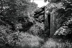Abandoned (Eva Haertel) Tags: eva haertel canon5dmarkiii dorf village erkelenz umgesiedelt resettled braunkohle browncoal scheune barn natur nature vegetation üppig wanton alt old tür door open offen