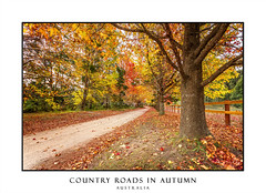 Country roads in Autumn lined with maples and deciduous trees (sugarbellaleah) Tags: autumn lane road rustic maple trees fall leaves colours red orange yellow warm russet outdoor nautre season countryside county rural farm deciduous lifestyle nature environment vivid australia dirtroad
