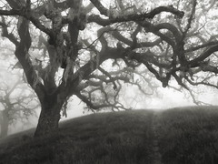 Hunting Hollow Fog Series 6 (StefanB) Tags: 1235mm 2019 californa em5 fog henrycoe hiking mood tree treescape huntinghollow outdoor statepark