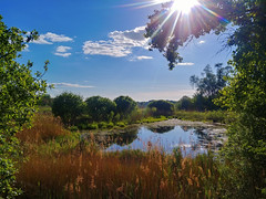 Spring mood (.: mike | MKvip Beauty :.) Tags: lgg6 lgh870 lg rearcamera1 71° wideangle mhandheld availablelight naturallight backlight backlighting sun sunstar dof nature pond water reflections spring bergpfalz germany europe mth mkvip ngc