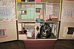 Cat House (Throwingbull) Tags: cat feline leela funny humor humorous doll house cathouse
