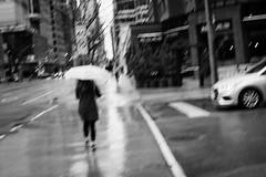 Such a Lonely Day (MattPokluda) Tags: black white blackandwhite bw photography rainy city cityscape umbrella people street toronto ontario canada nikon d5200 nikkor35mm 35mm focal length