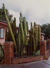 Sunnyvale, California (bior) Tags: pentax645nii pentax645 6x45cm ektachrome e200 kodakektachrome slidefilm mediumformat 120 sunnyvale street rain suburbs cactus cacti