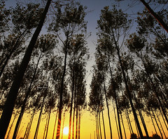 Uncovering Harmony (Robyn Hooz) Tags: alberi sunrise alba cielo trees tronchi villadelconte brenta