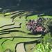 Rice Terraces of Bangaan