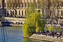 489 Paris en Mars 2019 - le Saule Pleureur de l'Île de la Cité et le Louvre (paspog) Tags: paris france seine mars march märz 2019 quai saulepleureur îledelacité