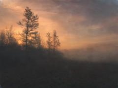 The larch trees at sunrise (lydiacassatt) Tags: explored maine fog sunrise inexplore hipstamatic