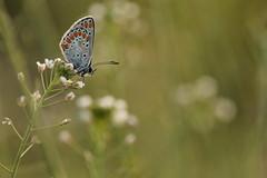 sera (@5imonapol) Tags: butterfly bug nature april macro sunset life apring spring