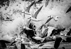 Animals_Sea  irds_0O6A1573-1-1.jpg (walter2046) Tags: animals shoreline natgeo solitary survival flora seasonal winter mackretail wildlife outdoors atlanticocean beach waves shadow sealife snow instagramr markhopson crystals alone canon abstract newjeersey stilllife ocean surf seabirds capemay