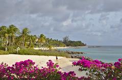 IMG_1531-a (Jennika Argent) Tags: jennikaargent barbados caribbean west indies