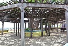 IMG_1522_a (Jennika Argent) Tags: jennikaargent barbados caribbean west indies
