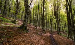 Parco dei Nebrodi (roberto_86) Tags: mangalaviti italy sicilia sicily nebrodi dei parco wood faggio bosco