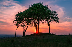 seven sisters sunset (ianpaterson1) Tags: seven sisters houghtonlespring trees sunset northeast