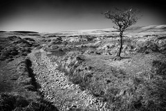 The loner (Christian Hacker) Tags: gidleighcommon dartmoor lonelytree singletree loner hawthorn landscape mono blackandwhite bw moorland hills nationalpark desolate barren vignette canon eos50d tamron 1750mm path outdoors outandabout