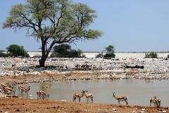 The Waterhole (Alan1954) Tags: namibia nature holiday 2018 etosha waterhole platinumpeaceaward