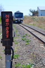 Coming (しまむー) Tags: fujifilm xe2 ebc fujinon 55mm f18 velvia yokohama kabushima 横浜 蕪島 八戸 蕪島神社 菜の花