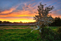 Hawthorn in the  sunset (Through Bri`s Lens) Tags: sussex sompting hawthorn wall thewall white sunset rural brianspicer canon5dmk3 canon1635f4 leereversegrad