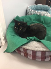 Salsa - 2 year old spayed female