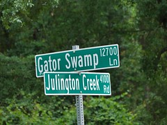Florida street signs (alansurfin) Tags: florida street signs gator creek swamp
