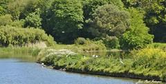 Anse de Lespoul- Pont-Croix / Bretagne (jean-paul Falempin) Tags: etang oiseaux nature nikon passion