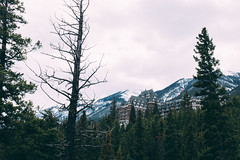 (thekevinchang) Tags: hotel fairmontbanffsprings forest trees nature hiking banffnationalpark alberta canada