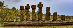 Moai at Anakena, Easter Island (David D Moore) Tags: easterisland rapanui isladepascua moai ahutongariki ranoraraku anakena ahuakivi theseven birdmancult birdman birdmen orongo ahutahai koteriku tahai vaiure ranokau polynesia chile