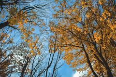 IMG_7908 (Pablo_sc) Tags: canon otoño canont6 1300d canon1300d orange calipso 1855 autumn efs