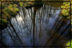 """ Reflection "" (tingel79) Tags: sea wasser reflection natur nature spiegelung wald sunshine sun tree photography photographie landschaft landscape sky weitwinkel"