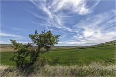 Camino de Peñalcázar (Fernando Forniés Gracia) Tags: españa castillayleón soria peñalcázar campo naturaleza cielo nubes árbol paisaje landscape