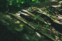 KRIS9657 (Chris.Heart) Tags: kéktúra túra hiking hungary nature balaton természet