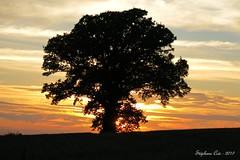 Arbre et coucher de soleil (Stephanos72) Tags: arbre nature sunset coucherdesoleil bretagne morbihan