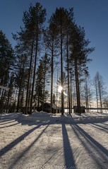 Visit Lapland (stefano.sedrani1) Tags: atmosphere winter travel trees nikon nature cold scenery snow frozen finland lapland landscape beautiful