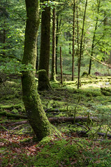 A9903261_s (AndiP66) Tags: wald forest woods bäume trees natur nature morgen morning frühling spring grün green schweiz switzerland langenthal sony alpha sonyalpha 99markii 99ii 99m2 a99ii ilca99m2 slta99ii sigma sigma24105mmf4dghsmart sigma24105mm 24105mm art amount andreaspeters