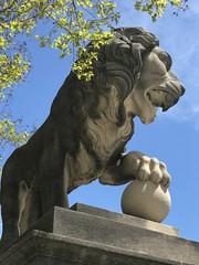Lion at the Baltimore Museum of Art - April 2019 1 (litlesam1) Tags: lions spring2019 april2019