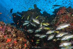 Reef fish biomass