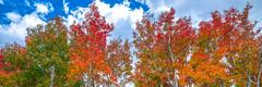 Eastern Sierra Fall Foliage California Fall Color! North Lake Bishop Creek Clouds! High Sierra Autumn Aspens Red Orange Yellow Green Leaves! Sony A7R II & Carl Zeiss Sony Vario-Tessar T* FE 16-35mm f/4 ZA OSS Lens! Elliot McGucken (45SURF Hero's Odyssey Mythology Landscapes & Godde) Tags: eastern sierra fall foliage california color north lake bishop creek clouds high autumn aspens red orange yellow green leaves sony a7r ii carl zeiss variotessar t fe 1635mm f4 za oss lens elliot mcgucken