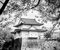 (mblaeck) Tags: japan japanese travel journey adventure blackandwhite bw monochrome osakacastle osaka caslte cherryblossoms tree plants japanesearchitecture architecture