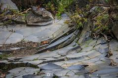 Abultamiento (SantiMB.Photos) Tags: 2blog 2tumblr 2ig santjoandelesfonts garrotxa girona invierno winter basalto basalt boscarró rocas rocks blister geo:lat=4221415645 geo:lon=250978968 geotagged santjoanlesfonts cataluna españa