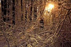 Morning in the forest (prokhorov.victor) Tags: зима лес природа снег деревья солнце пейзаж утро