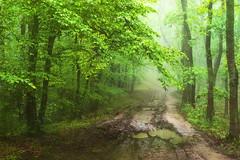 Rain forest (petrapetruta) Tags: green rainy water takumar nature