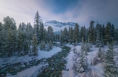 Canadian Rockies (Toni_pb) Tags: canada canadianrockies nikon nature nikkor142428 nikond850 landscape travel trees sky wild winterscape winter