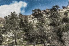 Shaggy Trees (p) (davidseibold) Tags: america california cloud hwy178 kerncounty kernrivercanyon mountain nature painting photosbydavid plant sky tree unitedstates usa