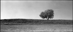 baum (jo.sa.) Tags: landschaft lebensraum baum bw mittelformat rollfilm wiese feld acker blackandwhite