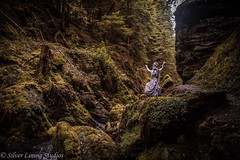 In the seclusion of the north (silver lining studios) Tags: blonde highlands scotland pucksglen demon fear waterfall burn stream forest witch fairytale magic