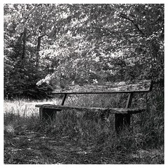 Film120_May2019_16-1 (CYCYPICS) Tags: carré hasselblad500 noiretblanc blackandwhite filmsisnotdead film120 mediumformat monochrome moyenformat naturemorte analogicphotography argentique