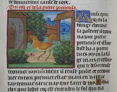 Vie et fables d'Ésope - Julien Macho, late 15th Century (Monceau) Tags: manuscript page aesop vieetfablesdésope julienmacho 15thcentury rooster