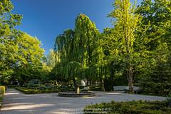 Rosengarten (ThomasNicoMeuterPhotography) Tags: thomas nico meuter neuss rhein kreis amrheinerft stadt architektur canon5dmarkiv tse24mmii rosengarten sommer abendstunde stadtpark