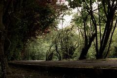 Abandoned trees (eberteaux) Tags: trees abandoned nature